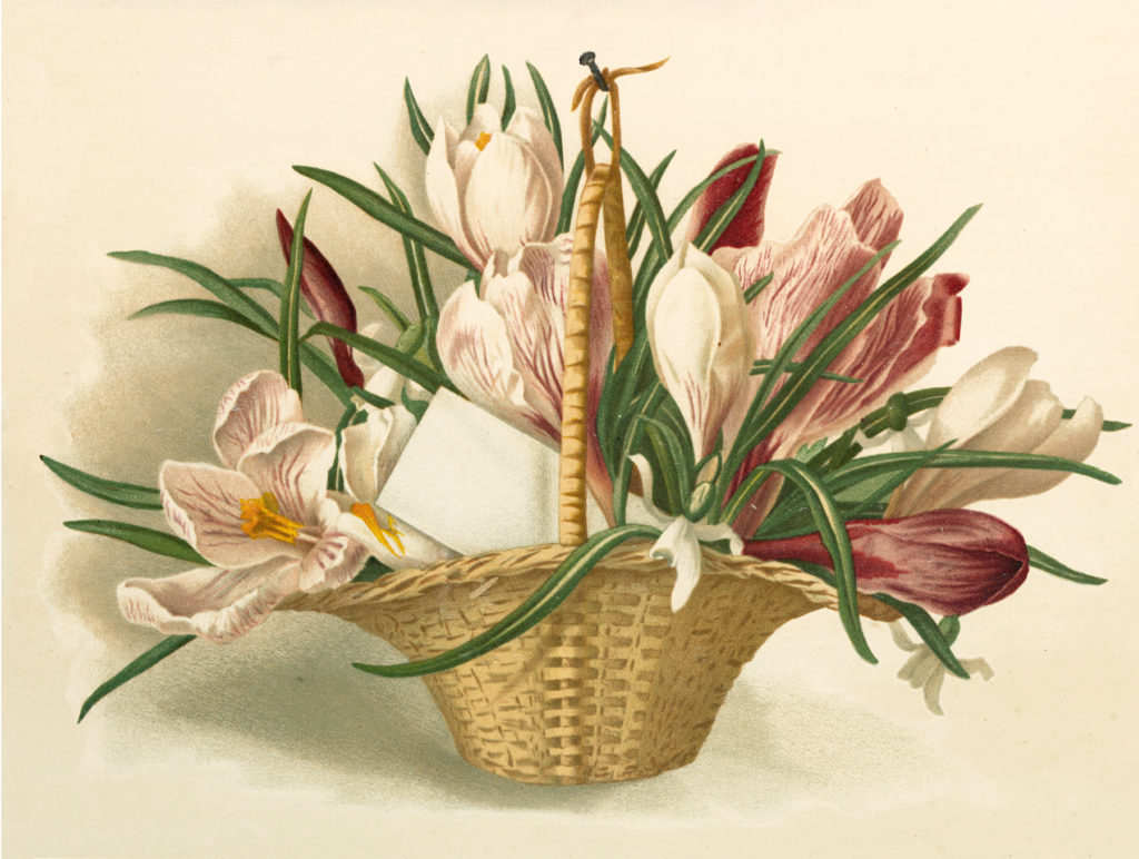Crocus Flower Basket