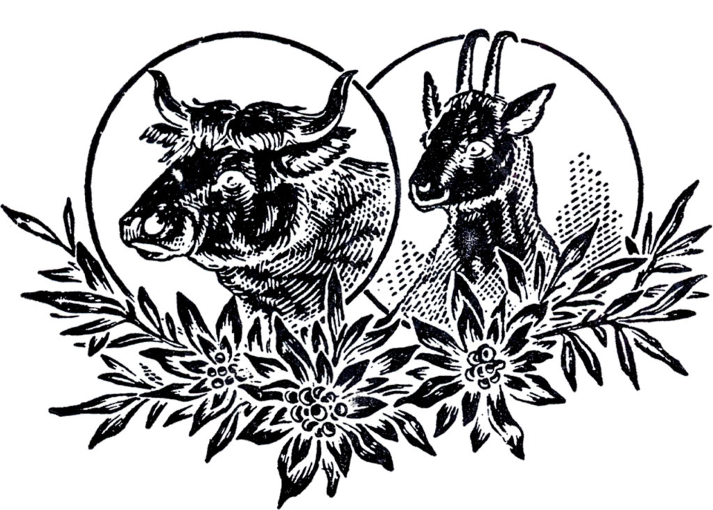 vintage farm animals goat illustration