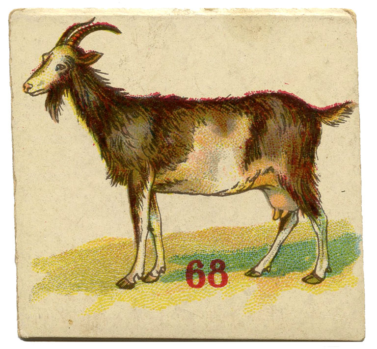animal game card goat image