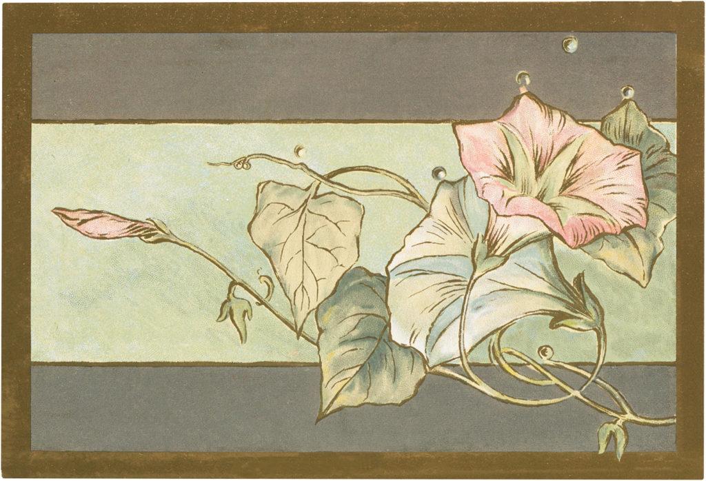 floral card morning glories illustration