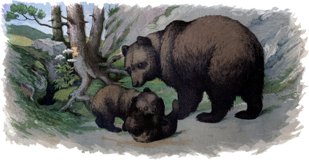 mother baby bears illustration