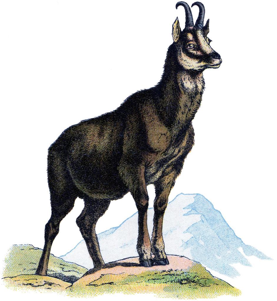 mountain goat cliplart