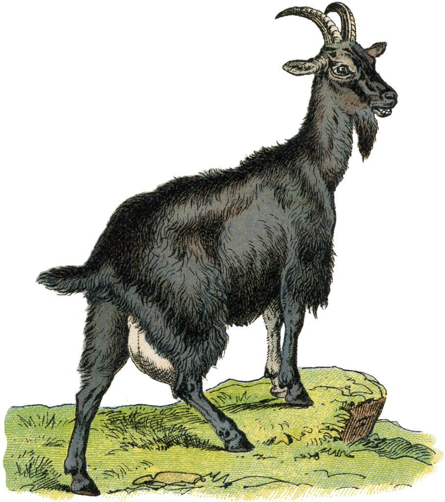Vintage Goat Clipart