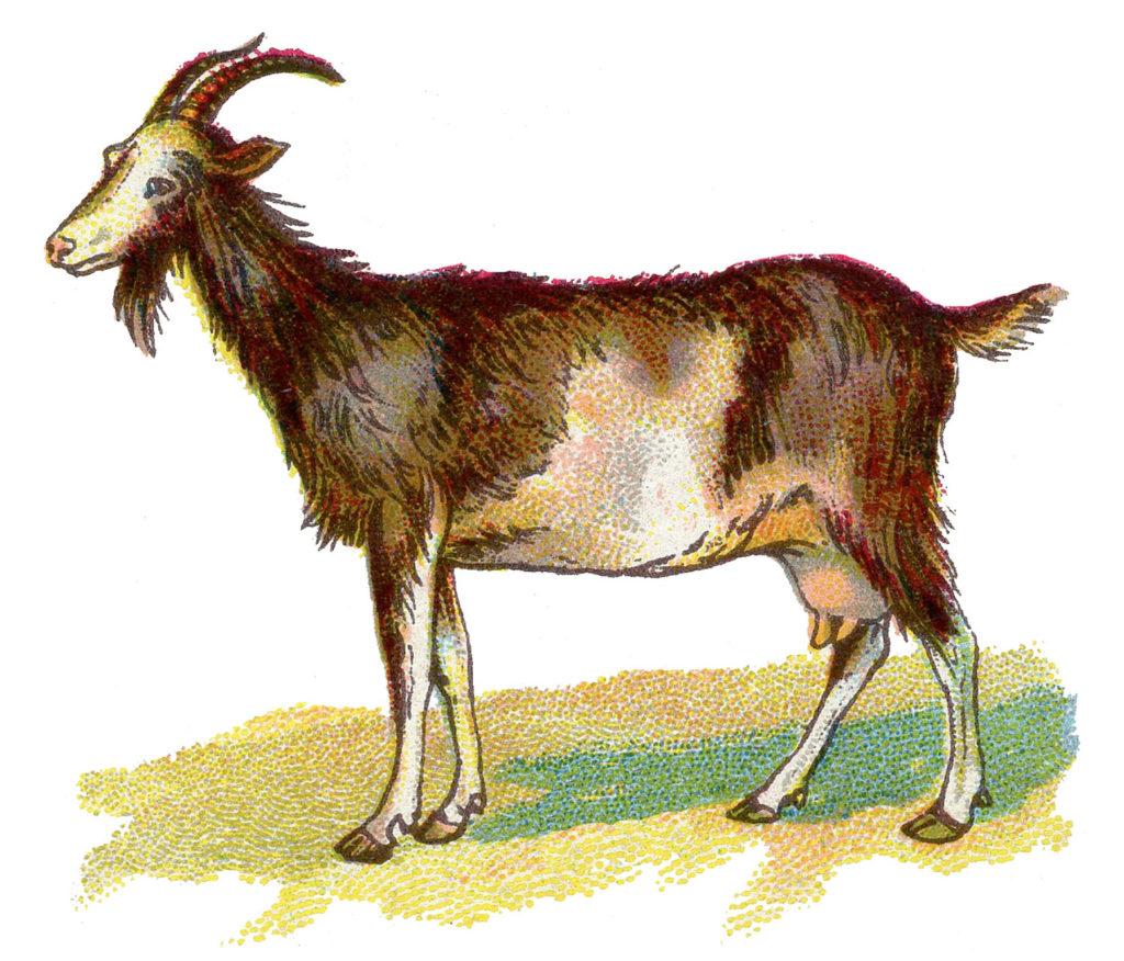 goat color illustration