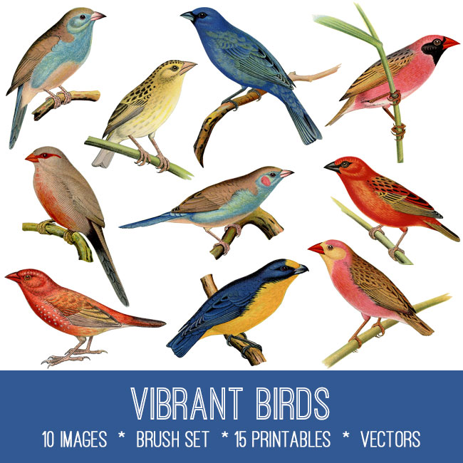 vibrant bird vintage images