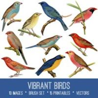 vintage vibrant birds ephemera bundle