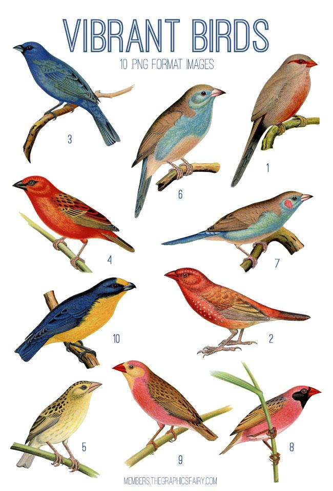 vintage vibrant birds ephemera digital image bundle