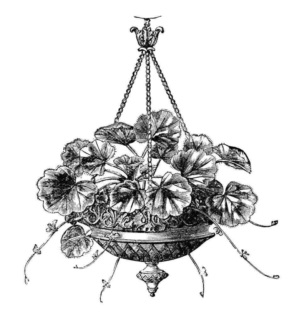 black white hanging geranium planter illustration