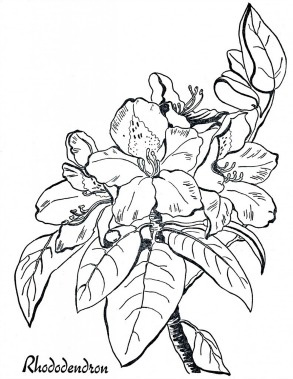 rhododendron coloring page clip art