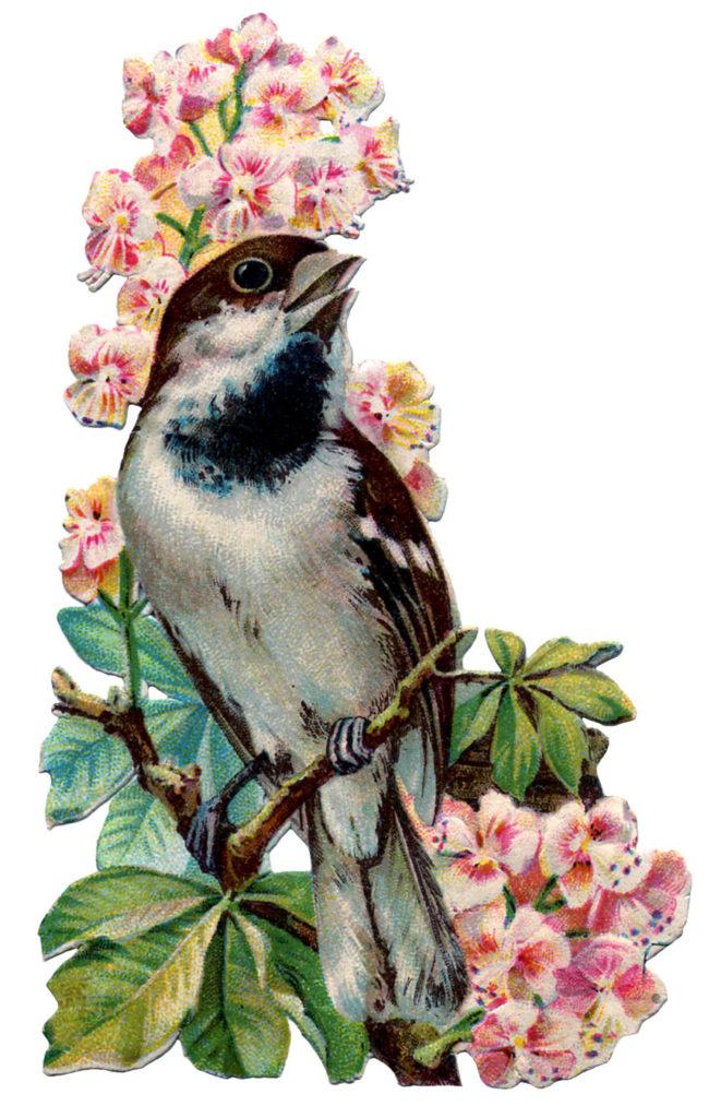 bird rhododendron vintage image