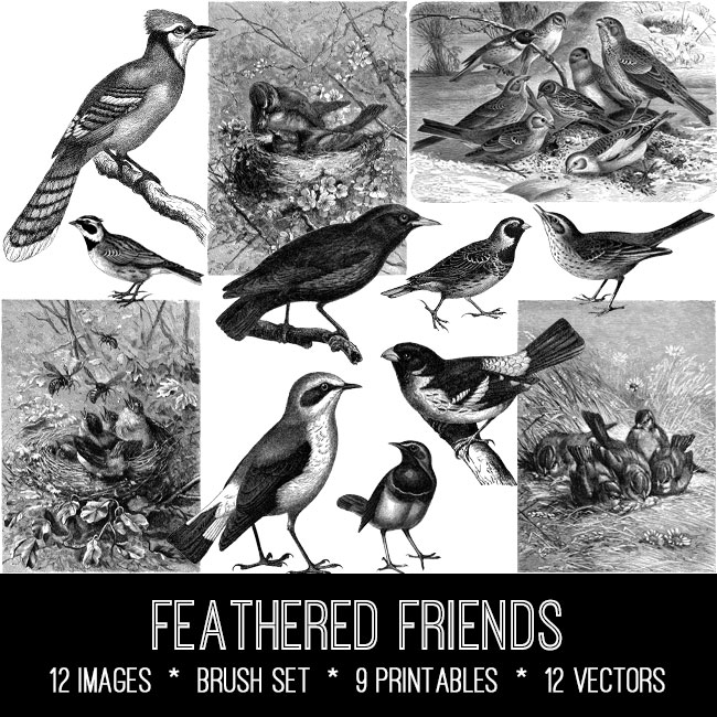 feathered friends vintage images