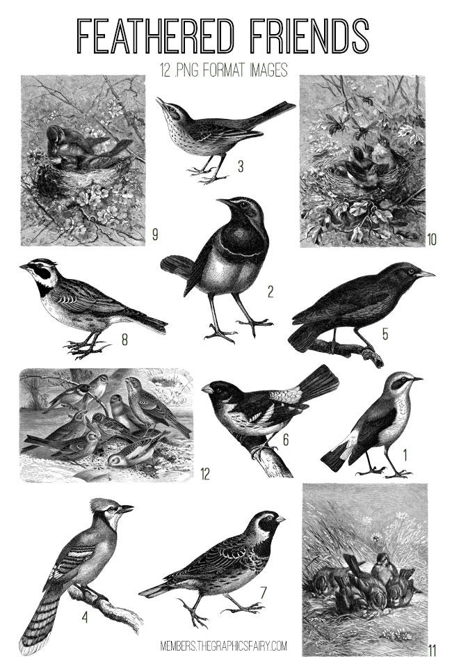 vintage feathered friends ephemera digital image bundle