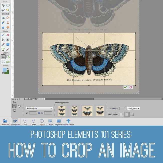 how to crop an image PSE Tutorial