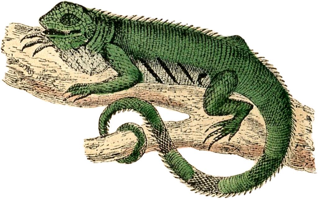 antique lizard image