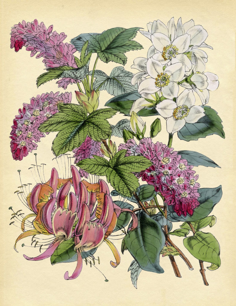 botanical pink illustration