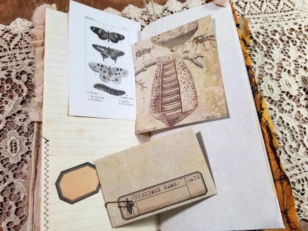 naturalist junk journal labels