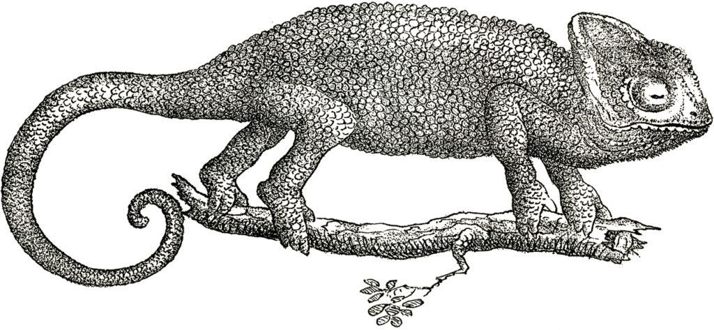 vintage chameleon branch clipart