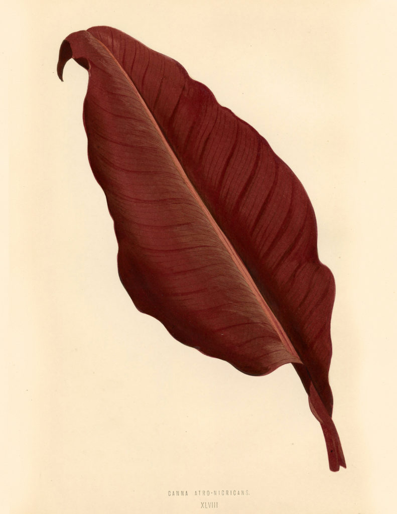 Burgundy Red Leaf