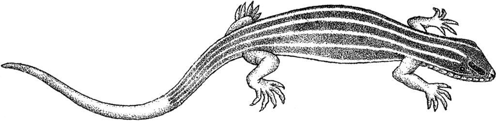vintage striped lizard illustration