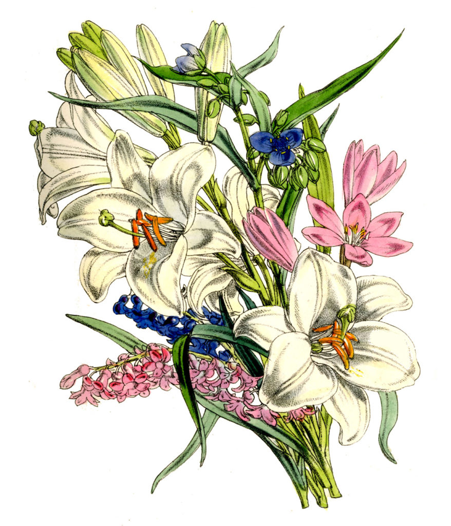 vintage floral bouquet 1855 illustration