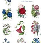 vintage pink blue & red florals ephemera digital image bundle