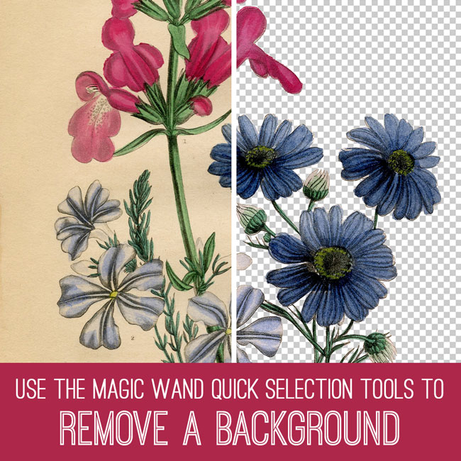 PSE Tutorial remove a background