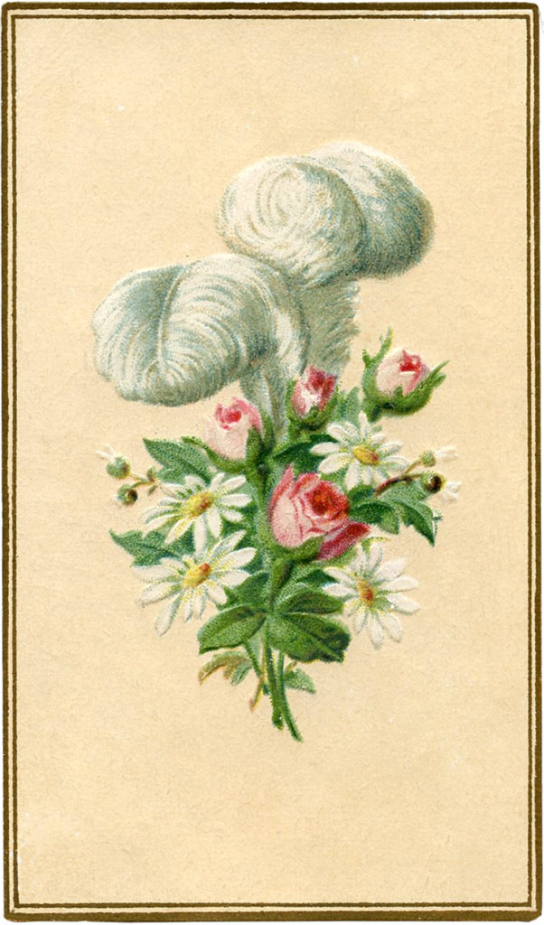 vintage feather daisies roses illustration