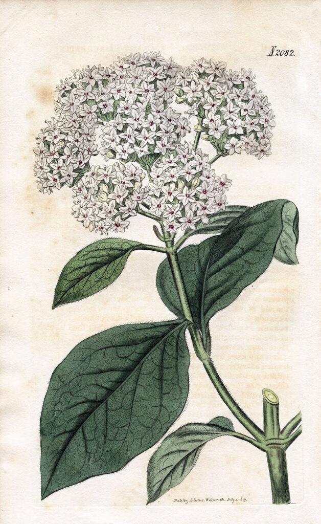White Botanical Flower Print