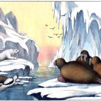 arctic icebergs walrus polar bear vintage illustration