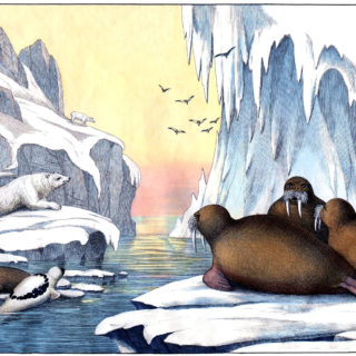 arctic icebergs walrus polar bear vintage illustration