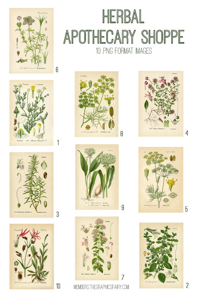 vintage herbal apothecary shoppe ephemera digital image bundle
