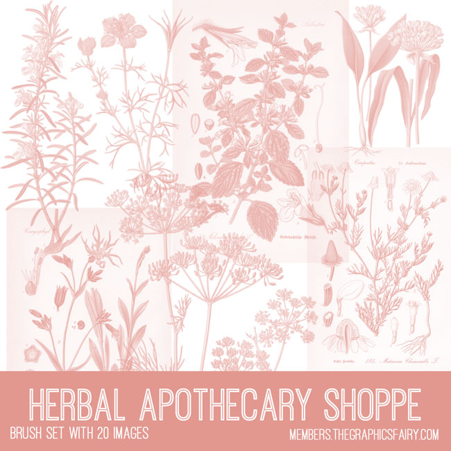 vintage herbal apothecary shoppe ephemera brush set