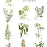 vintage herbal apothecary shoppe flowers ephemera digital image bundle