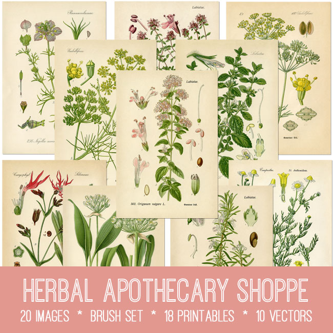herbal apothecary shoppe vintage images