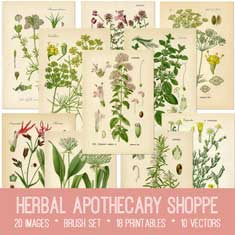 vintage herbal apothecary shoppe ephemera bundle
