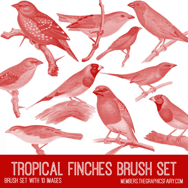 vintage tropical finches ephemera brush set