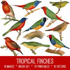 vintage tropical finches ephemera bundle