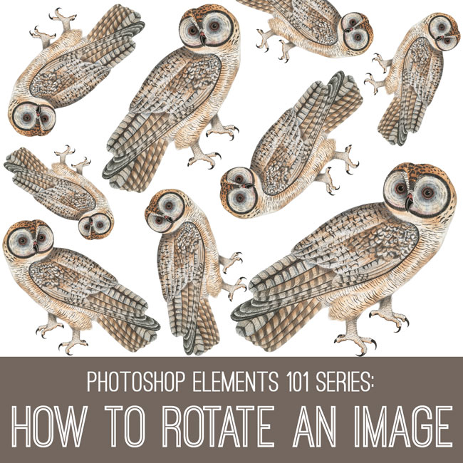 PSE tutorial how to rotate an image