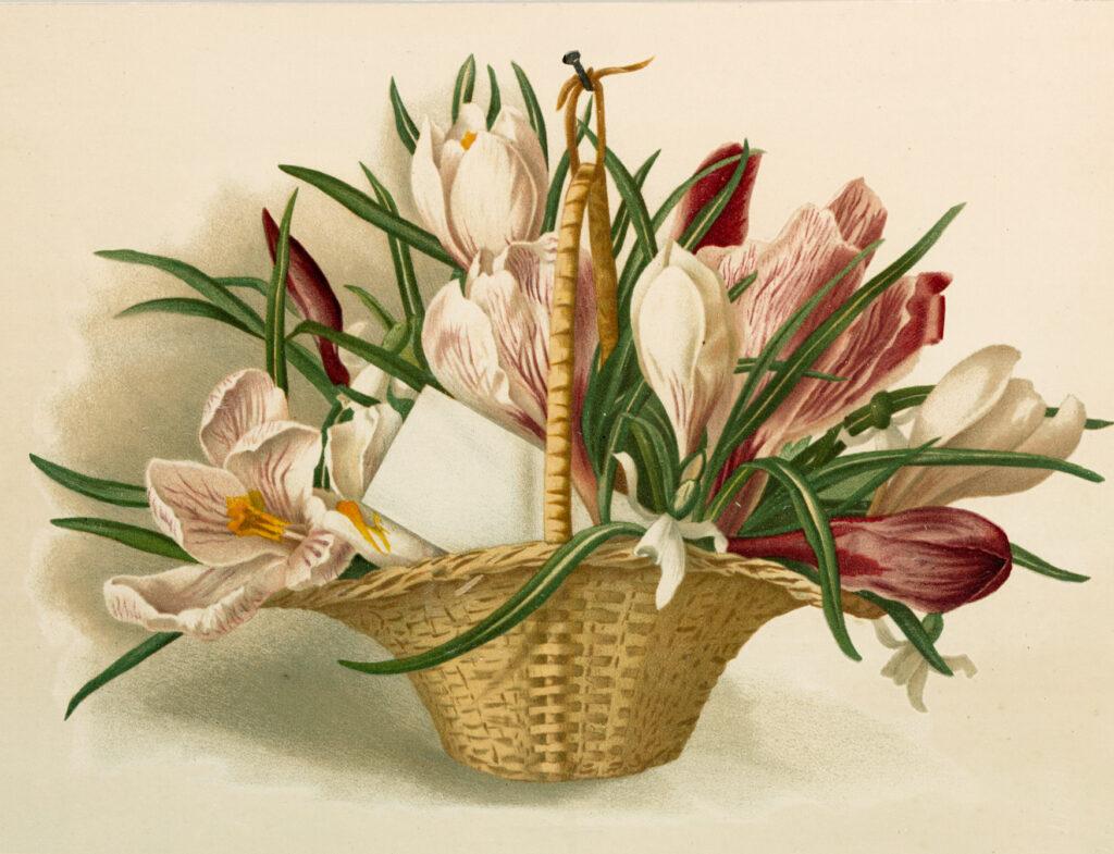 Crocus Basket Image