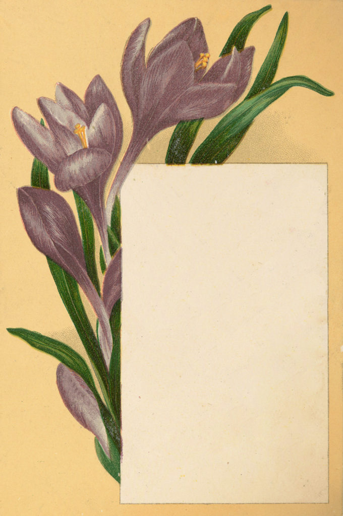 Crocus journal card vintage image