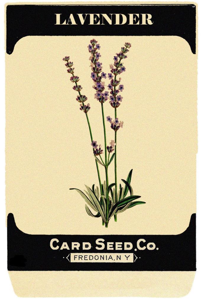 lavender seed packet image