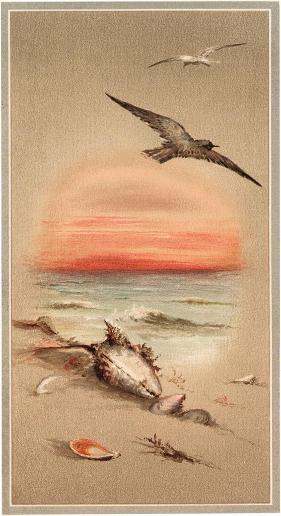 ocean sunset seagull seashells clipart