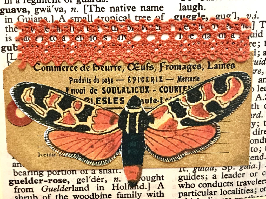 dictionary page lace moth image