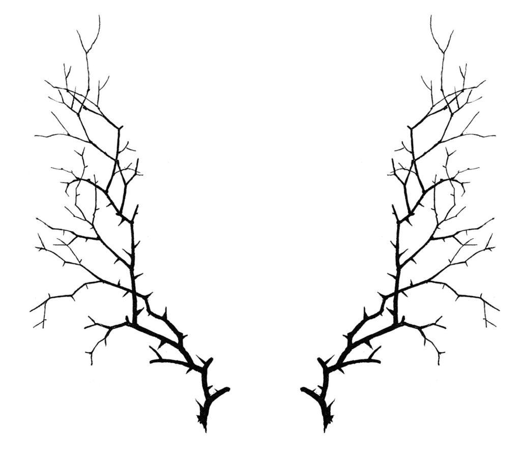 thorn frame clipart