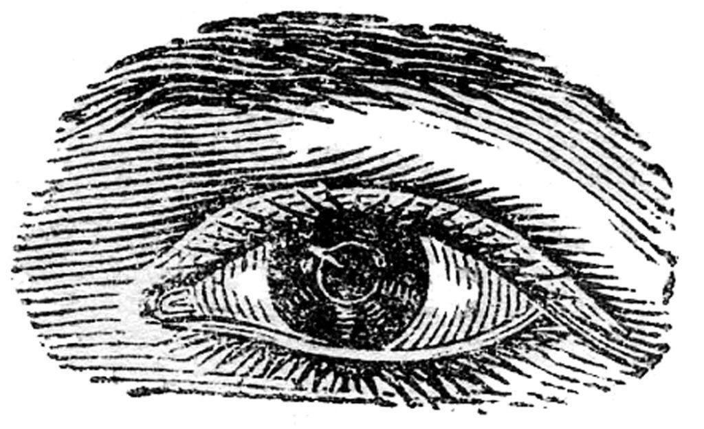 human eye vintage image