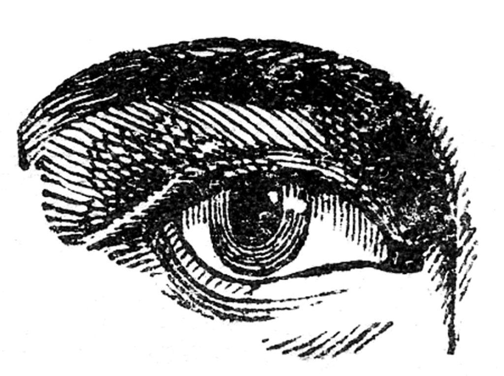 vintage human eye clipart