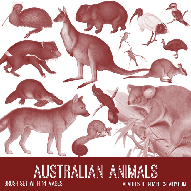 vintage Australian animals ephemera brush set