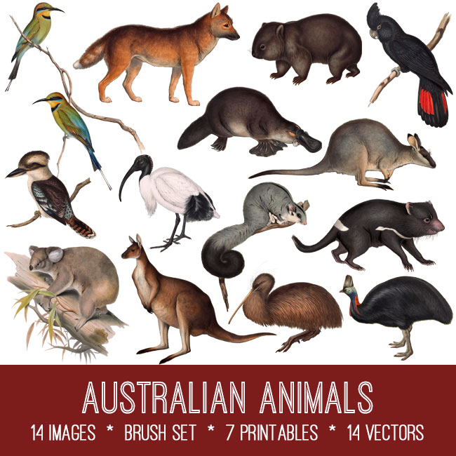 Australian Animals ephemera vintage images