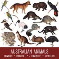 australian animals kit