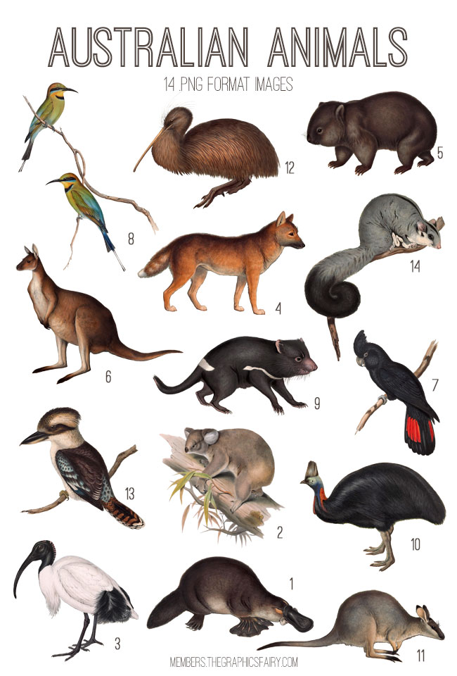 vintage Australian animals ephemera digital image bundle